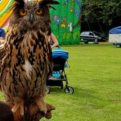 Large owl in front of bouncy slide - Click to open full size image