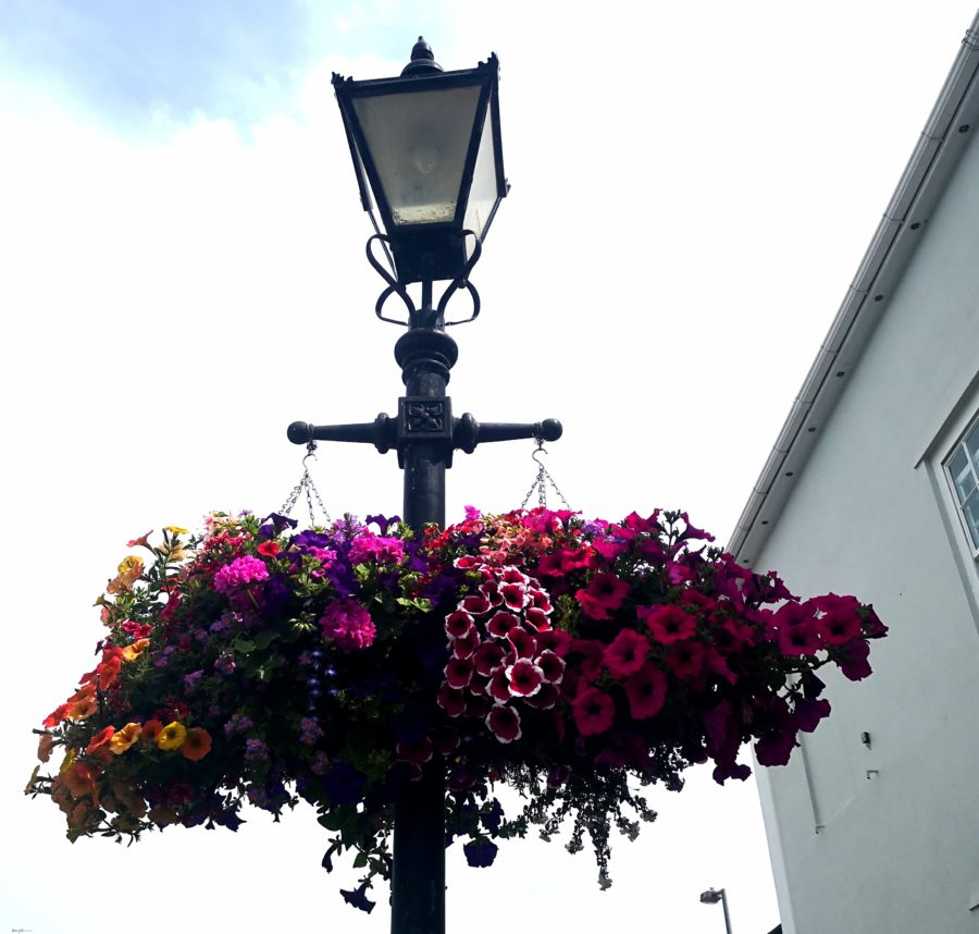 Hanging baskets on a lamp post1