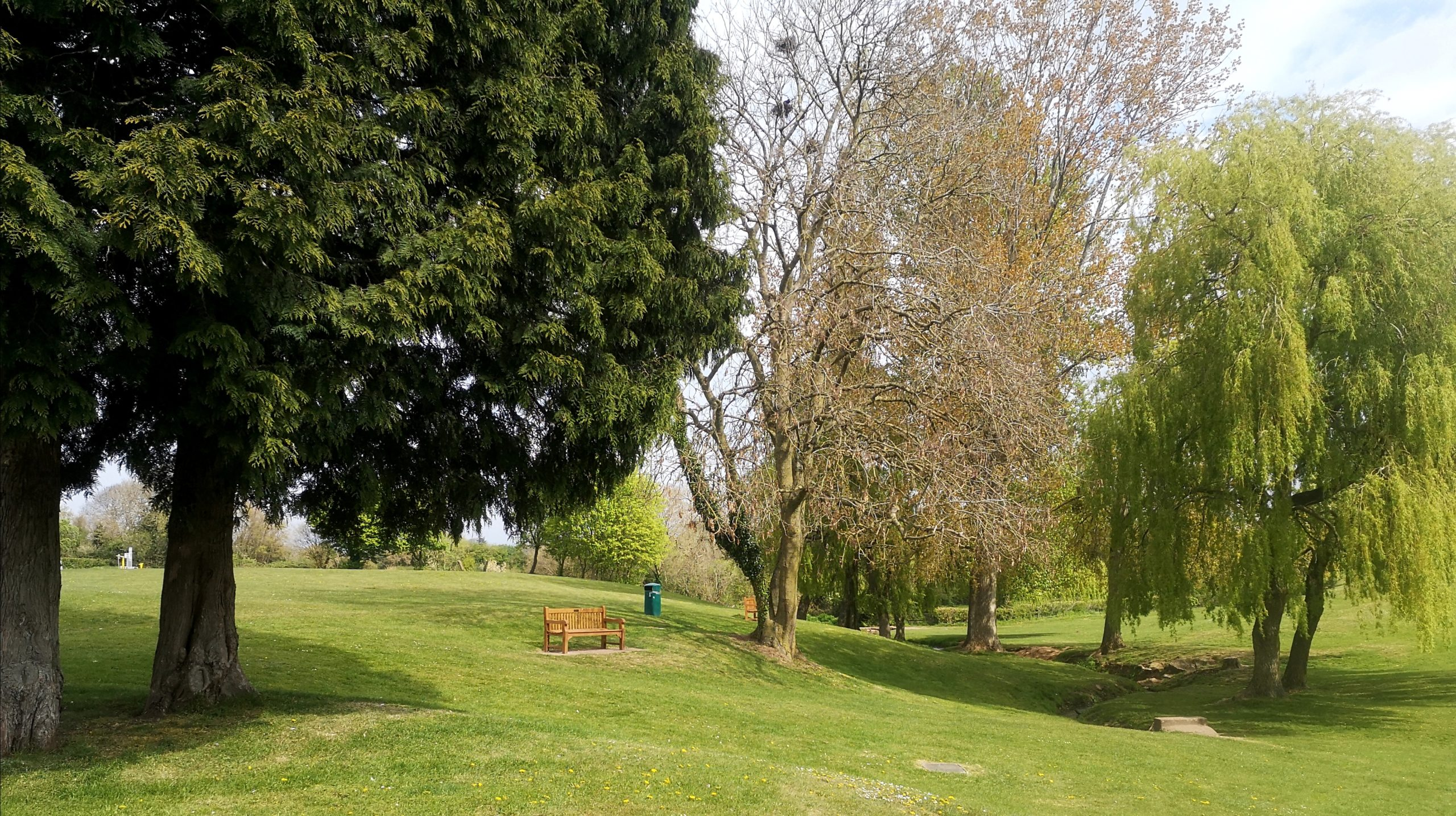 Trees at the Mundy Playing Fields